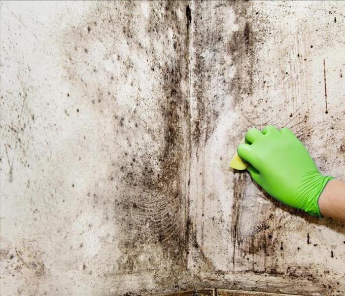 Mold Remediation SERVPRO® of Sumner County Mold and Mildew Service