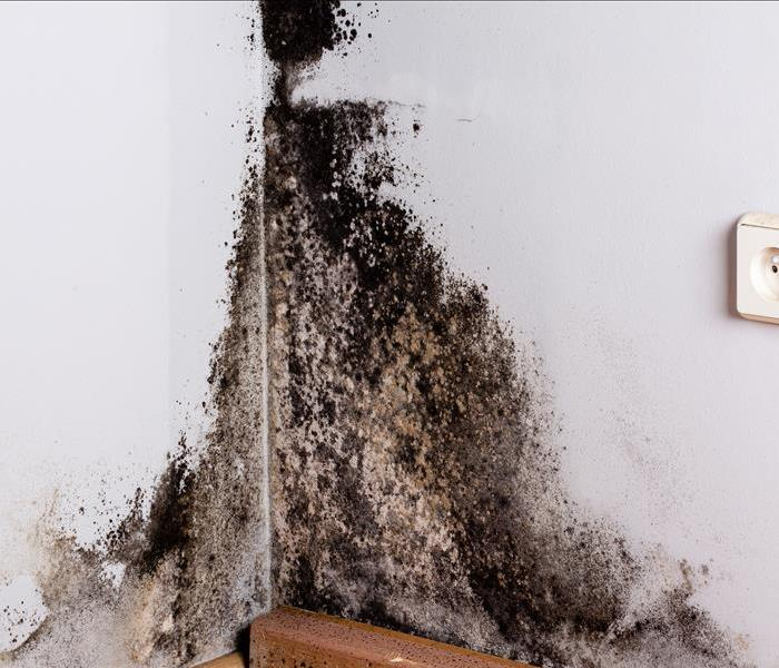 Mold Remediation Does Your Hendersonville Home Have A Mold Problem?